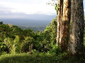 Brownszicht, Suriname foto Esther Schreuder (c)