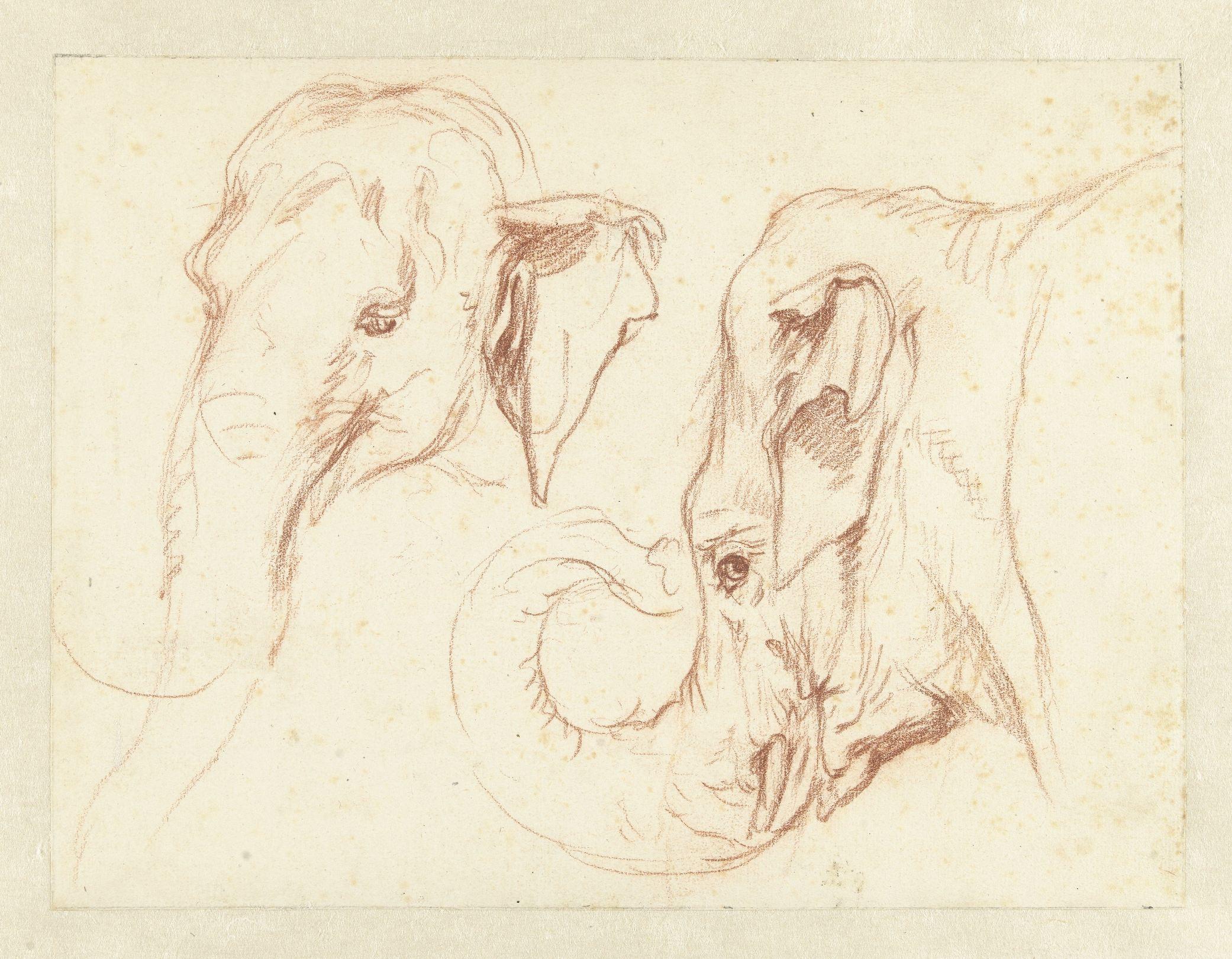 Twee schetsen vn de kop van een olifant Petrus Camper ca 1786 RP-T-1940-595